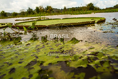 NO_Manaus0415 (Visit Brasil) Tags: travel brazil tourism horizontal brasil amazon rainforest vitriargia manaus norte amazonas detalhe ecoturismo externa semgente diurna riosolimes visitbrasil