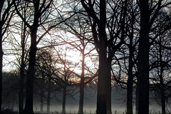 DSCF7495.tif (Ad Sebregts) Tags: fog forest margriet