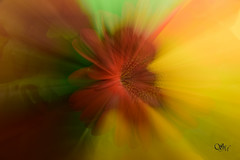 22/365 zooming (simo m.) Tags: abstract flower project 365 zooming progetto