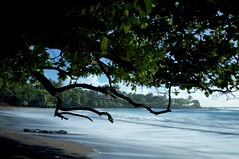 Serpent Tree, Hamoa Beach, Hana, Hawaii (Ken'sKam) Tags: ocean sea seascape tree beach nature hawaii sand surf driftwood hana serpent hamoabeach