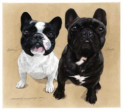 "Two French Bulldogs • <a style=""font-size:0.8em;"" href=""http://www.flickr.com/photos/64357681@N04/24169570911/"" target=""_blank"">View on Flickr</a>"