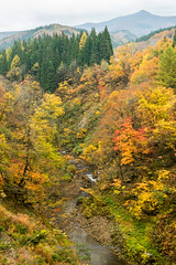 紅葉渓谷. (bgfotologue) Tags: travel autumn light red hk rain japan landscape photography hongkong photo leaf image outdoor momiji valley 日本 onsen 紅葉 秋 香港 hotspring maples northeast 旅行 東北 akita 秋田 風景 redleaves 溫泉 光 楓葉 港 影 2015 楓 雨 攝影 bgphoto 陰 秋季 地獄 戶外 峽谷 bellphoto