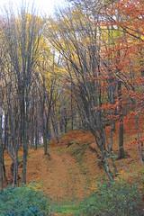Rausor_2909 (Horatiu B. Daniel) Tags: pastel toamna munti retezat munte culori padure rausor