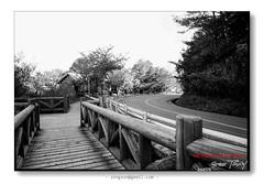 上海GP-86570005 (猜猜 Guess TSAI) Tags: 6 120 mamiya film 50mm 9 x 100 universal 上海 黑白 f63 sekor gp3 瑕疵片
