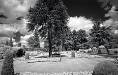 Brodsworth Hall Topiary Garden (pho-Tony) Tags: black color film rollei 35mm garden ir hall topiary cosina voigtlander bessa snapshot ishootfilm filter 400 infrared l analogue 135 rodinal 72 bessal f4 25mm hoya skopar englishheritage 720 voigtlanderbessal brodsworth brodsworthhall 720nm ir72 filmisnotdead topiarygarden hoyair72 ro9 rolleiinfrared400s