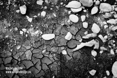 Rattlesnake Lake - Seattle (Naomi Rahim (thanks for 2 million hits)) Tags: travel trees bw lake abstract detail nature america forest landscape dead washington nikon rocks decay roadtrip hike wanderlust lakebed drought cascades pacificnorthwest wa pnw rattlesnakeledge northbend 2015 travelphotography rattlesnakelake nikond7000