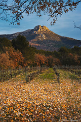 Mont Olympe (Alexis Rostan-Photographie) Tags: travel autumn trees winter light sunset sky mountain france mountains tree green field olympus mount vineyards fields vignes mont champ feuilles olympe trets