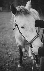 (Joelle Poulos) Tags: horse white black colour film 35mm photography minolta candid pony