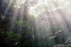 FK2A4267-Modifier (Christophe TW) Tags: light nature canon natural dream lumiere cascade paradis plantes rve maido 974 ctw974