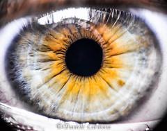 My eye in Macro (Daniele Carmona) Tags: world macro green eye eyes nikon hd through nikoncorporation nikond7100 danielecarmona lpyellow2016