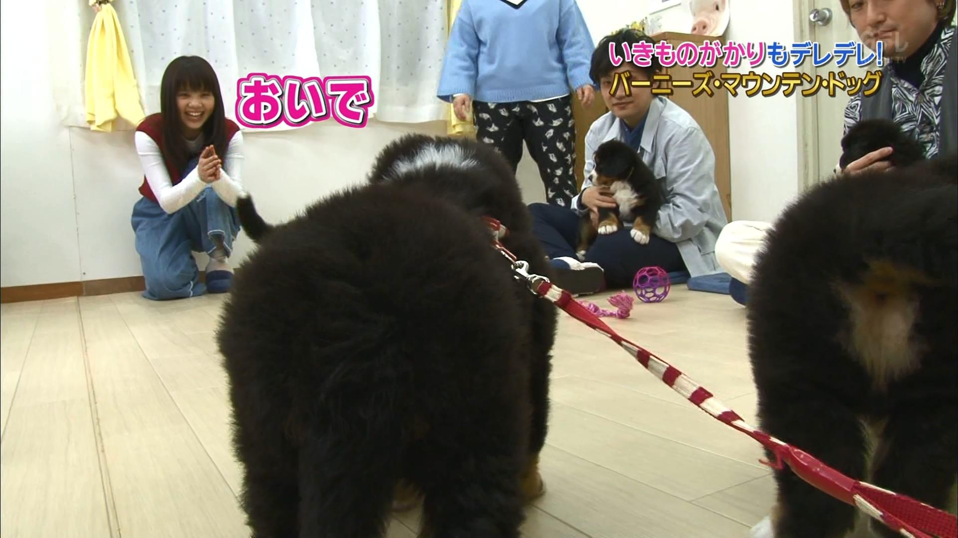 2016.02.27 全場(天才!志村どうぶつ園).ts_20160227_204938.873