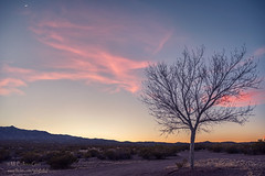 Wisp of Pink (inlightful) Tags: pink moon newmexico tree rural sunrise crescent baretrees crescentmoon