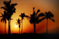 Oman Silhouette (sirVictor59) Tags: travel silhouette nikon oman viaggi d300 salalah sirvictor59