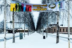 Iisalmi (Tuomo Lindfors) Tags: winter snow tree suomi finland koivu alley banner birch lumi talvi puu mainos raatihuone iisalmi colorefexpro pohjolankatu koivukuja niksoftware theacademytreealley pelikarhut iisalmen