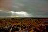 Horizon (Ed.ward) Tags: ocean sea sky moon holiday grass clouds iceland horizon atlanticocean 2014 nikond700 nikonafnikkor20mmf28