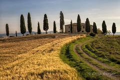 Villa I Cipressini (Anne.Berger) Tags: tuscany cypress valdorcia toskana zypressen