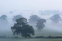 Avalon Fog (artursomerset) Tags: trees england mist fog glastonbury somerset avalon dense