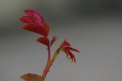 Bahar Olur -2- (alibaykala) Tags: spring trkiye safranbolu bahar aybala baykala baykalacom alibaykala
