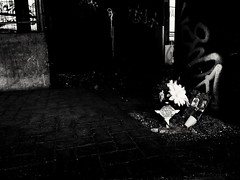Left Behind (snarulax) Tags: street bridge blackandwhite white black flower blancoynegro blanco mexico puente death calle df child cross negro flor muerte cruz nio decadence decadencia