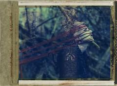 'RoidWeek Spring 2016 Day 7 photo #1 (denzzz) Tags: portrait abandoned polaroid 4x5 expired analogphotography largeformat urbex filmphotography beautifuldecay instantfilm polaroid59 roidweek wista45dx snapitseeit
