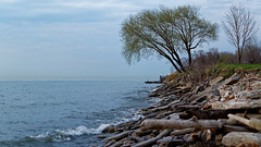 Evening Erie (hjharland5) Tags: park wood ohio lake tree water landscape evening spring lakeerie outdoor cleveland shoreline rocky overcast driftwood eastshoreparkclub