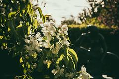 Batifolage (Sylvain Alexandre) Tags: park flower fleur statue naked spring arboretum parc printemps nue angers batifolage