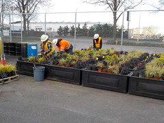 2ND AVE PLANTER PROJECT - for installation along the 2nd Ave PBL (Seattle Department of Transportation) Tags: seattle bike project landscape gardeners planters landscaping 2nd crew ave lane transportation planter protected pbl sdot