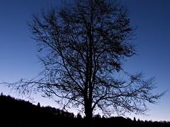 Merletti e ricami (Fernando De March) Tags: alberi alba natura olympus 420 cielo e albero controluce mattino merletti ricami