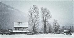 House at Pemberton (rogermccallum) Tags: winter canada monochrome snowing
