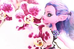 Trlling rchids (Mariko&Susie) Tags: pink orchid flower toy toys spring gnome doll dolls purple magenta violet pixie elf susie troll mariko kjersti shallowdepthoffield 50mmlens dollphotography elfears goreway marikosusie monsterhigh canoneos600d canoneosrebelt3i canoneoskissx5 sistersmarikosusie kjerstitrollson brandboostudents howdoyouboo