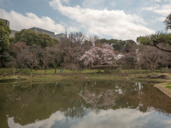 P1590599 (Rambalac) Tags: asia japan lumixgh4 flowers plant pond water азия япония вода пруд растение цветы