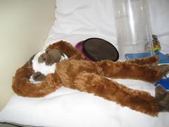 Missing Monkey 011 (EmpathicMonkey) Tags: toby ball toys happy monkey photo dolls olive story bjd jointed bluefairy