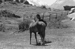 (Estefania Mateo) Tags: viaje argentina caballo vida chalten analogico salvaje