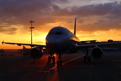 Magic moments (Oleg Botov) Tags: sky night plane sunrise dawn airport aircraft aviation jet apron airbus su spotting afl airliners a320 avia aeroflot jetliner svo  planespotting   sheremetyevo   avgeek  uuee  planeporn crewlife slavniyoleg