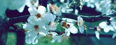 beautiful nature (*Nils aus Kiel*) Tags: plants flower nature colors beautiful germany lumix purple bokeh pflanzen blumen lila blten