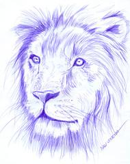 leon a lapicero (ivanutrera) Tags: wild animal pen sketch drawing wildlife lion leon draw dibujo lapicero boligrafo dibujoalapicero dibujoenboligrafo
