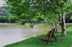 Feliz Semana proc (Ruby Ferreira ) Tags: trees lake green bench lago banco plantains rvores pltanos cotiasp