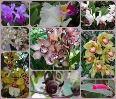 Lots of flowers. (France-) Tags: life orchid flower nature fleur beauty collage sandiego exhibit balboapark orchide californie