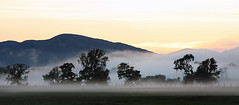 Evening mist of the A811 (Ray Crabb) Tags: trees mist tree fence evening 2014 drymen scotchmist a811