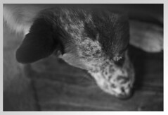 cammorrison (camimorrison) Tags: amigo perro mejor vagabundo
