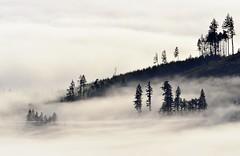 Olympic National Park, Washigton (jkrieger84) Tags: trees mountains fog landscape nikon olympic olympicnationalpark