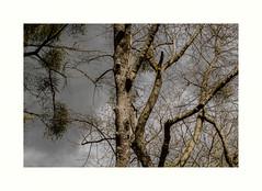 Frondaison (hlne chantemerle) Tags: panorama france guy gris soleil ciel arbres sombre extrieur vue paysages fort lumineux photographies nuageux essonne vgtaux