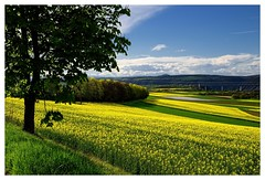 20160424-164411 (lichtschattenjaeger) Tags: yellow landscape gold diesel bio eifel gelb raps biodiesel vulkan getreide gerste weizen benzin hafer biosprit