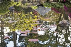 A la manire de Monet DXOFP LM+35_P2667 (mich53 - Thanks for 2700000 Views!) Tags: flowers fleurs reflections peinture explore reflet monet tableau reflets tang jardinjaponais jardinalbertkahn summiluxm35mmf14asph tlmtre leicamtype240