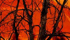Silhouettes (Zack Mensinger) Tags: trip summer paintedhills nationalmonument oregontrip johnday 2015 johndayfossilbedsnationalmonument canon40d