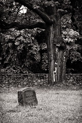 Lonely Ivan (uhx72) Tags: world bw stilllife white black tree cemetery germany soldier army weimar thringen war tomb tombstone thuringia russian