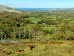 2015 The Burren - Corkscrew Hill (murphman61) Tags: road county ireland clare cows hills valley burren hillside ire anclr n67 anchlir gragan angrgn