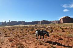 Wild horses (Dario Manfredi) Tags: wild horses usa monument utah natura valley monumentvalley cavalli