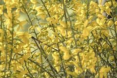 1304162540 (jolucasmar) Tags: viaje primavera andaluca paisaje contraste ros mirador curso puestasdesol cazorla montaas cuevas bosques composicion panormica viajefotof
