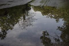 Il mondo capovolto (AnnaPaola54) Tags: alberi riflessi 25aprile pozzanghera